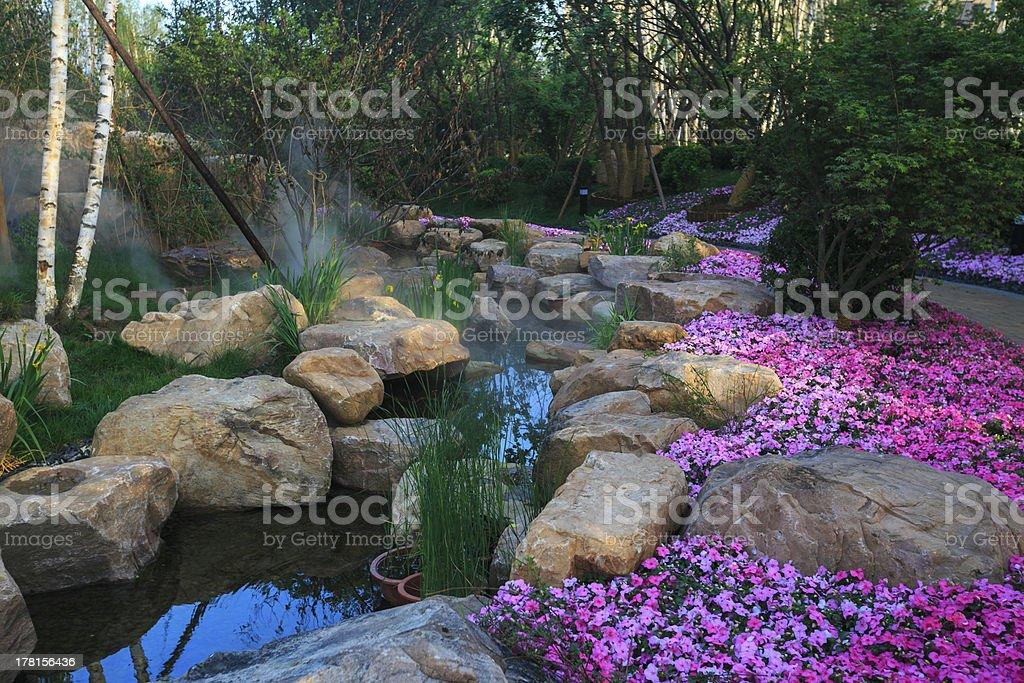 Aquatic garden in a home backyard, stock photo