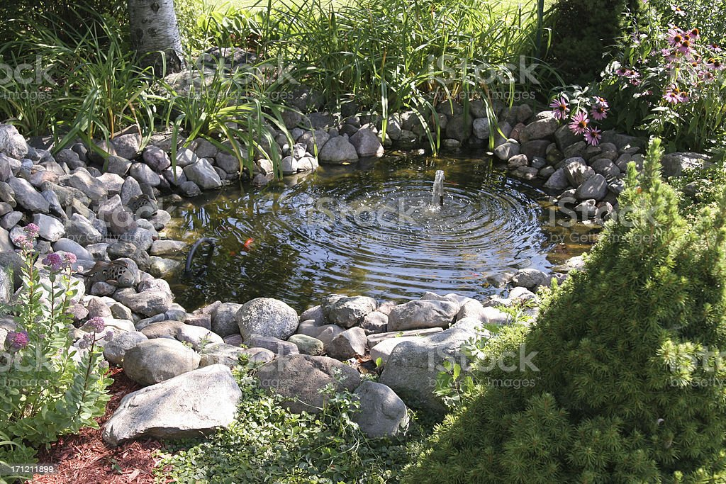 Aquatic garden stock photo
