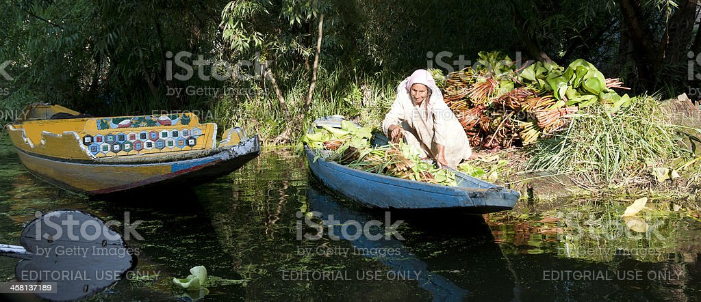 Aquatic Harvesting in India royalty-free stock photo