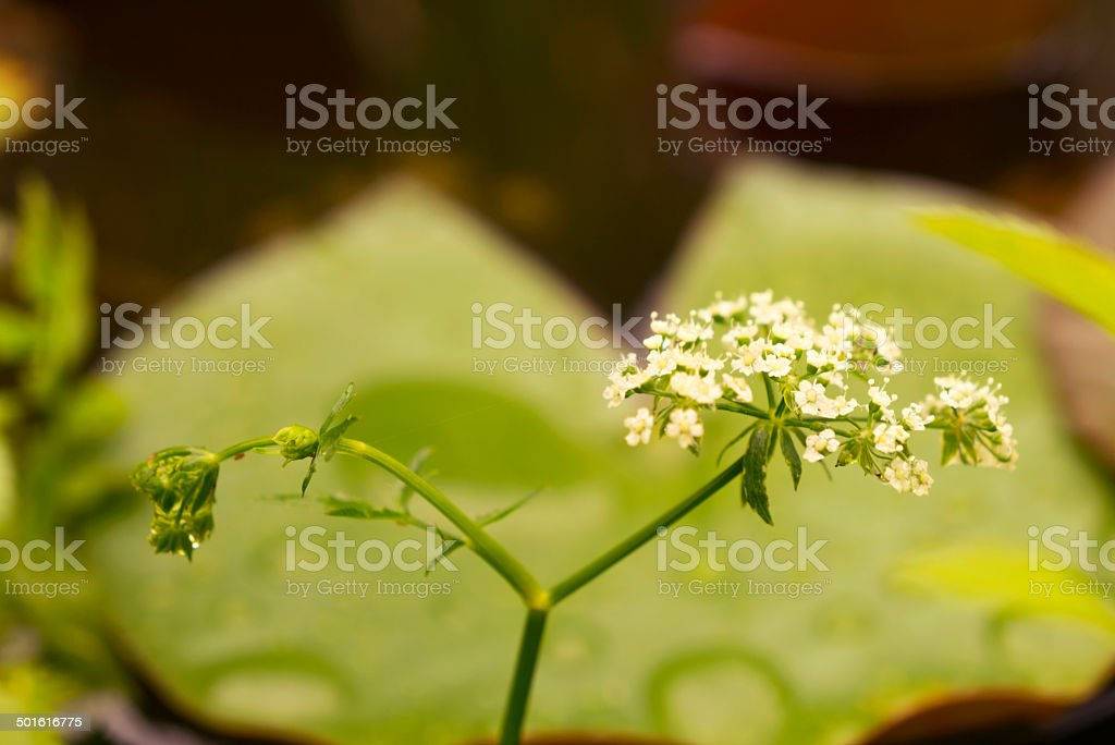 Aquatic plants flower stock photo