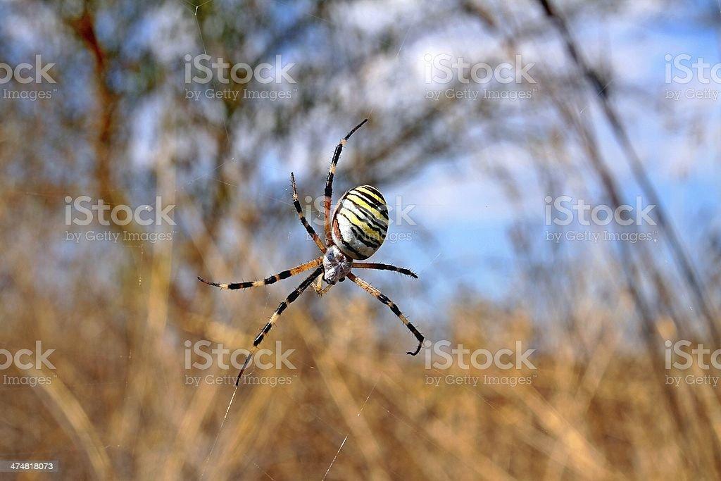 Araña stock photo