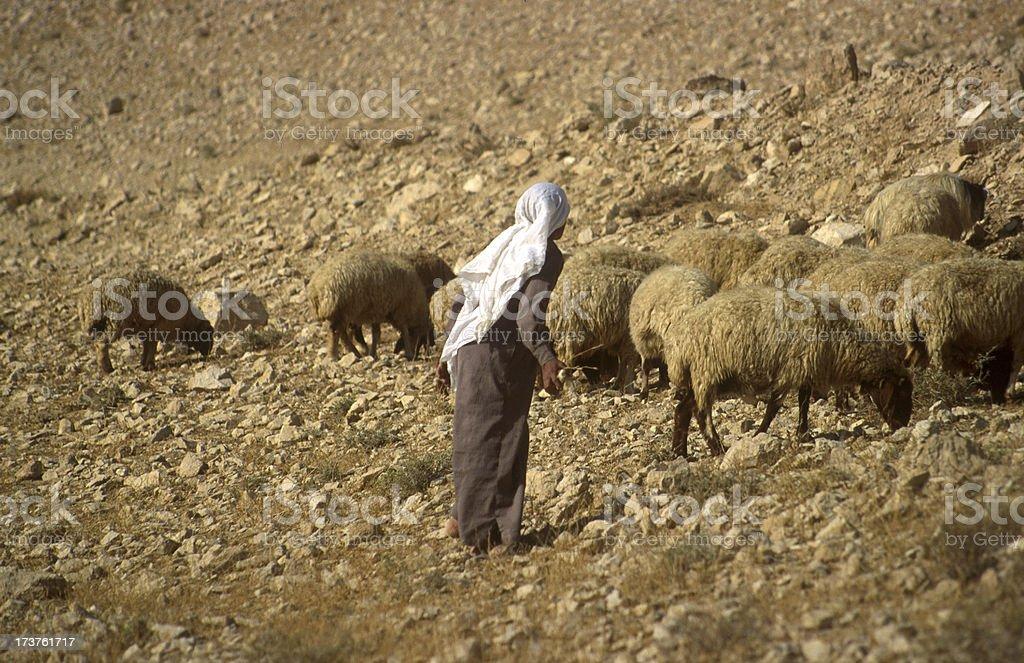 Arab shepherd royalty-free stock photo