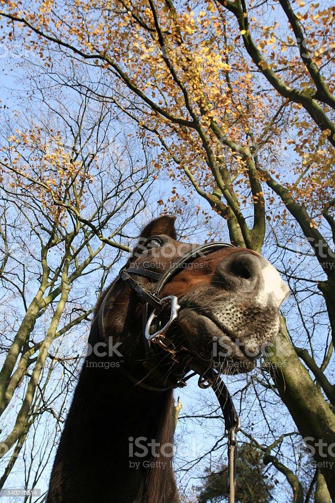 Arabesk Bosque en otoño foto de stock libre de derechos
