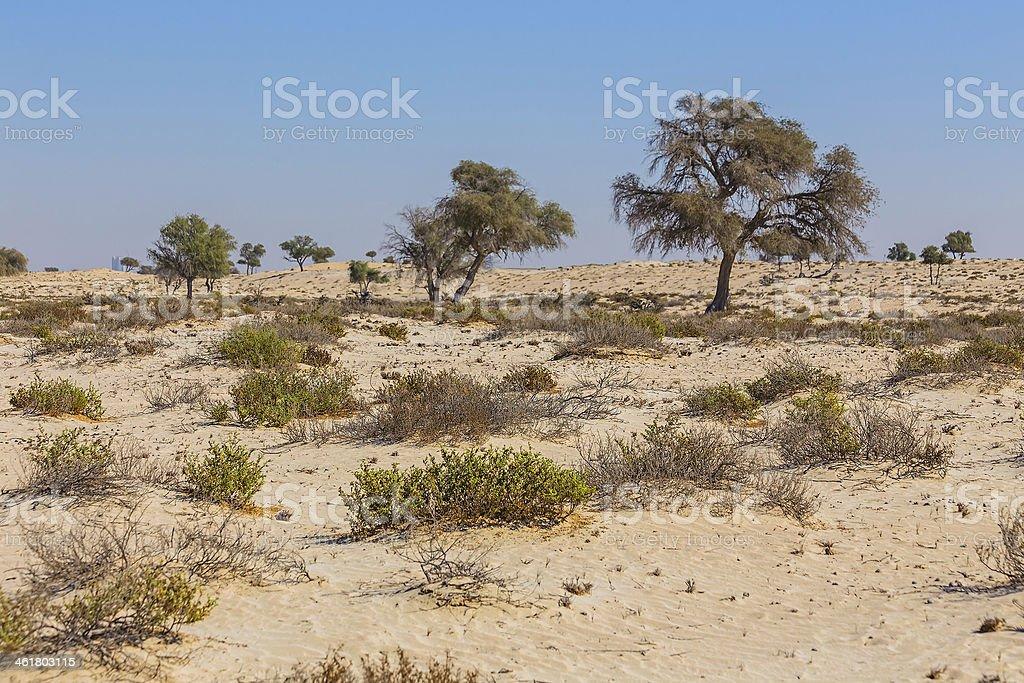 Arabian desert stock photo