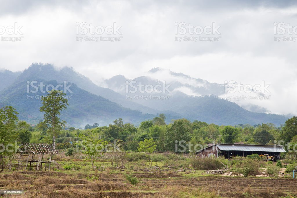 Arable farming rice. stock photo