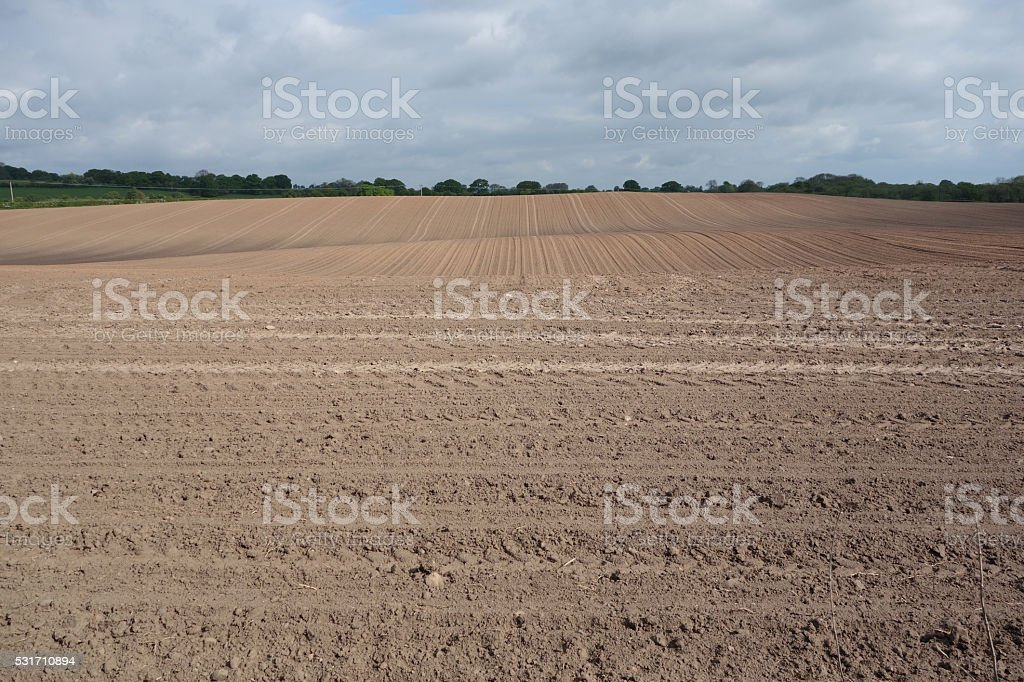 Arable field stock photo