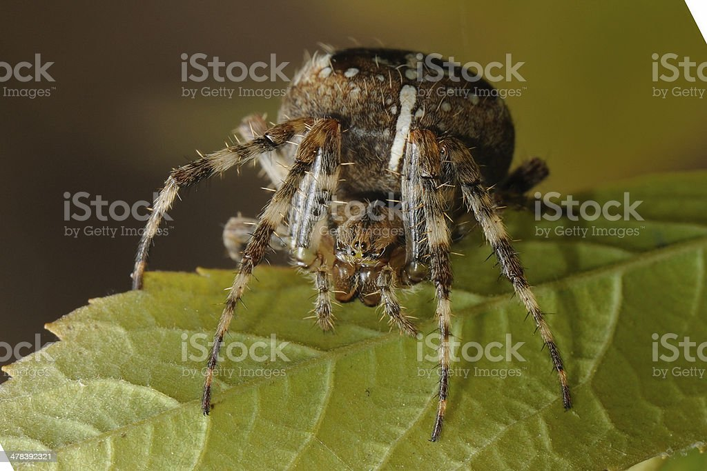 Arachnid stock photo