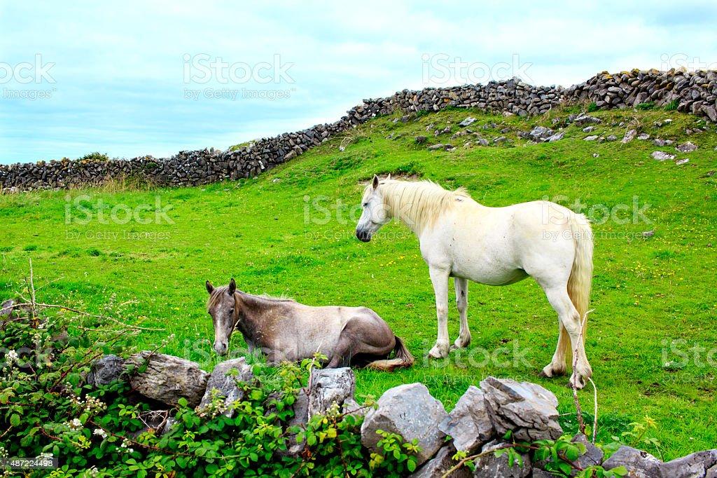 Aran island horses, Ireland stock photo