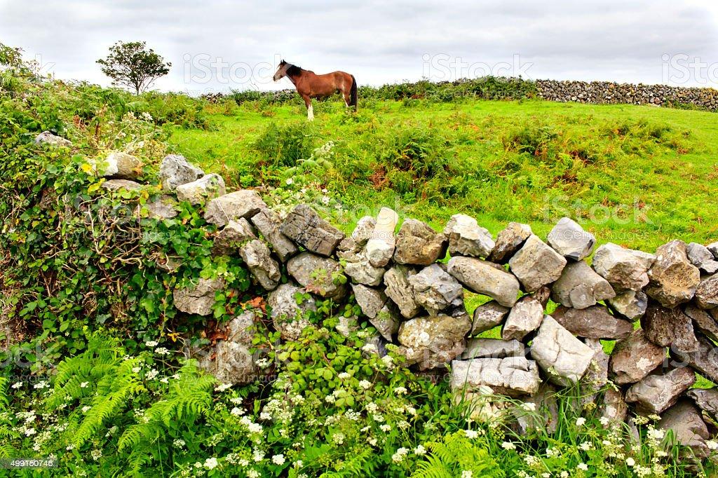 Aran island, Ireland stock photo