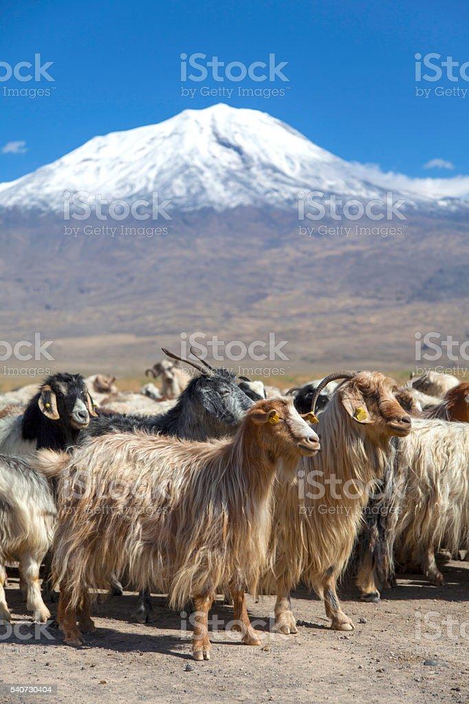 Ararat Mountain stock photo