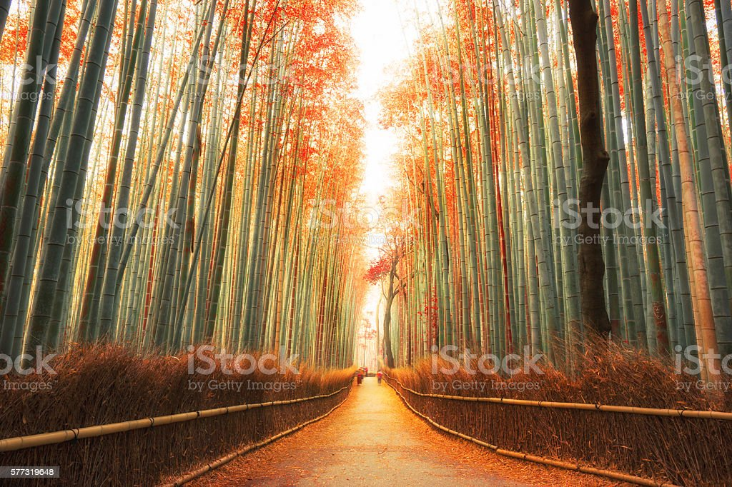 Arashiyama Bamboo Forest in Kyoto, Japan stock photo