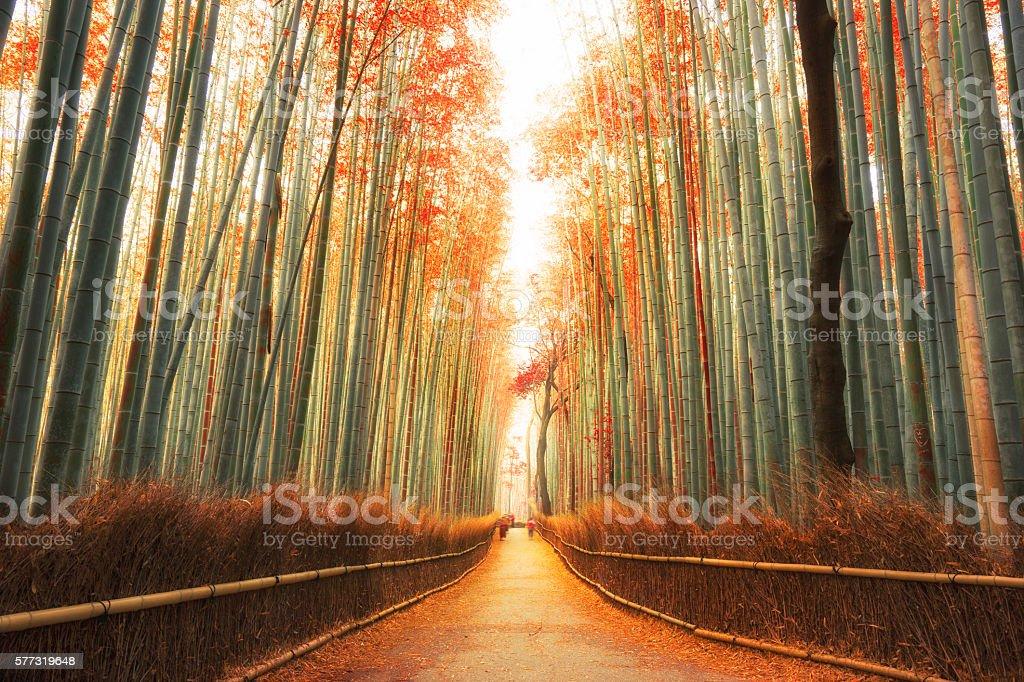 Arashiyama Bamboo Forest in Kyoto, Japan stock photo
