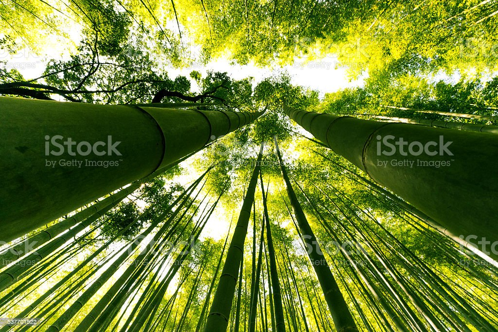 Arashiyama Bamboo Forest, Kyoto, Japan stock photo