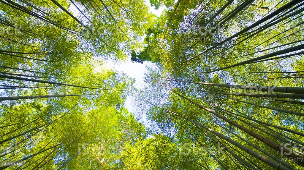 Arashiyama Bamboo Forest, Kyoto stock photo
