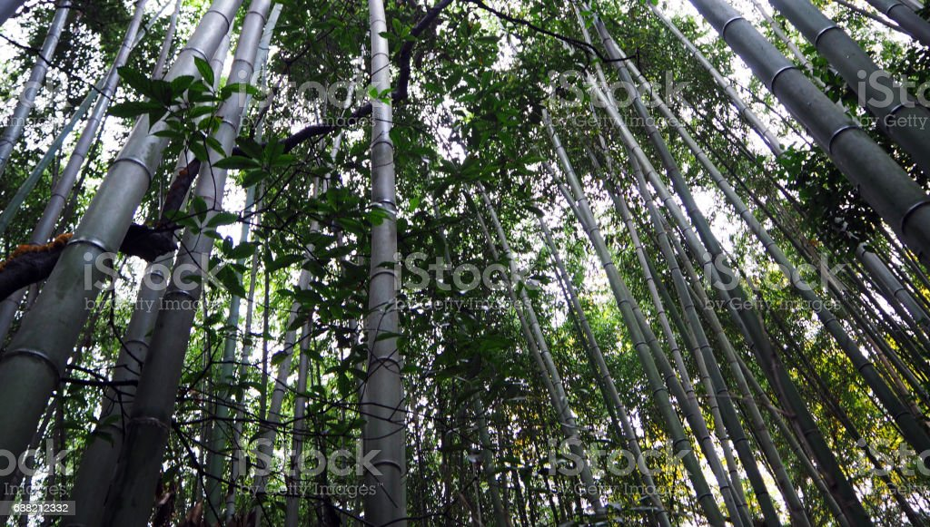 Arashiyama Bamboo Forest stock photo