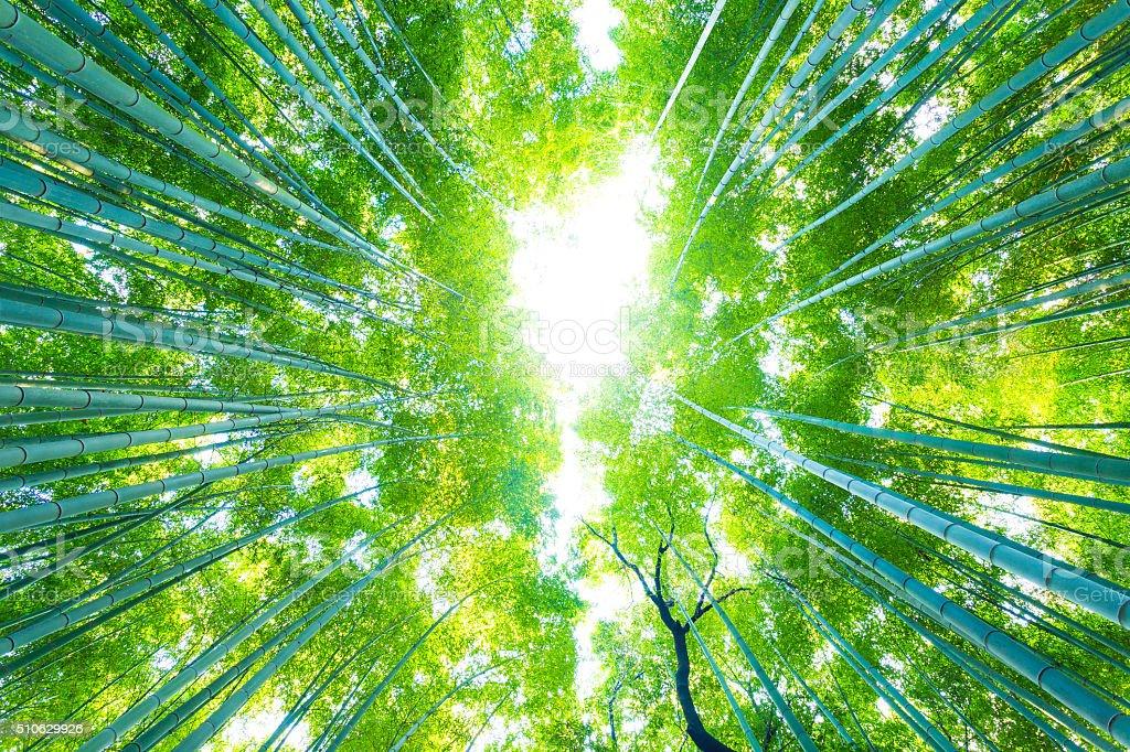 Arashiyama Bamboo Trees Radial Looking Directly Up stock photo