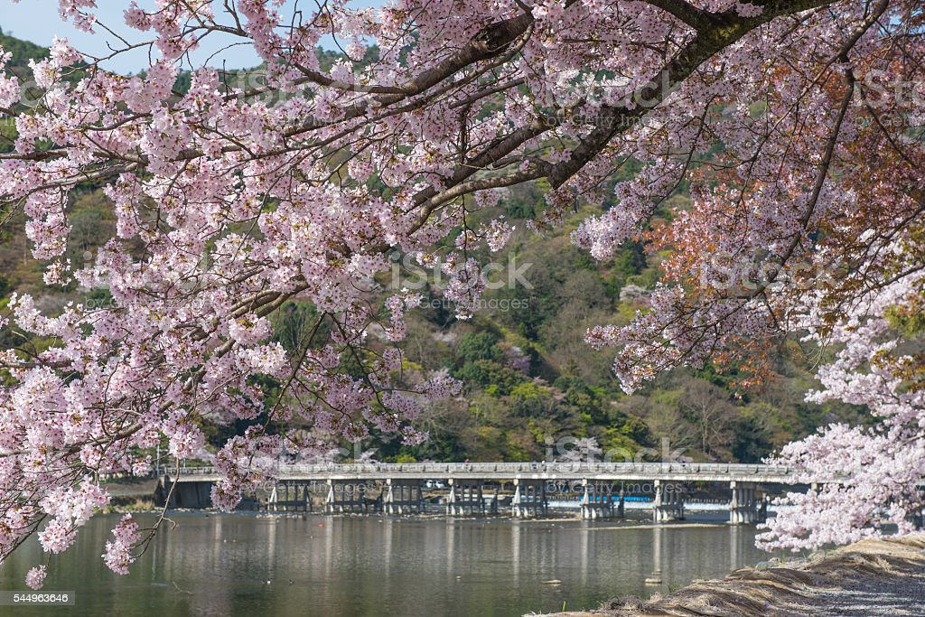 Arashiyama in spring stock photo