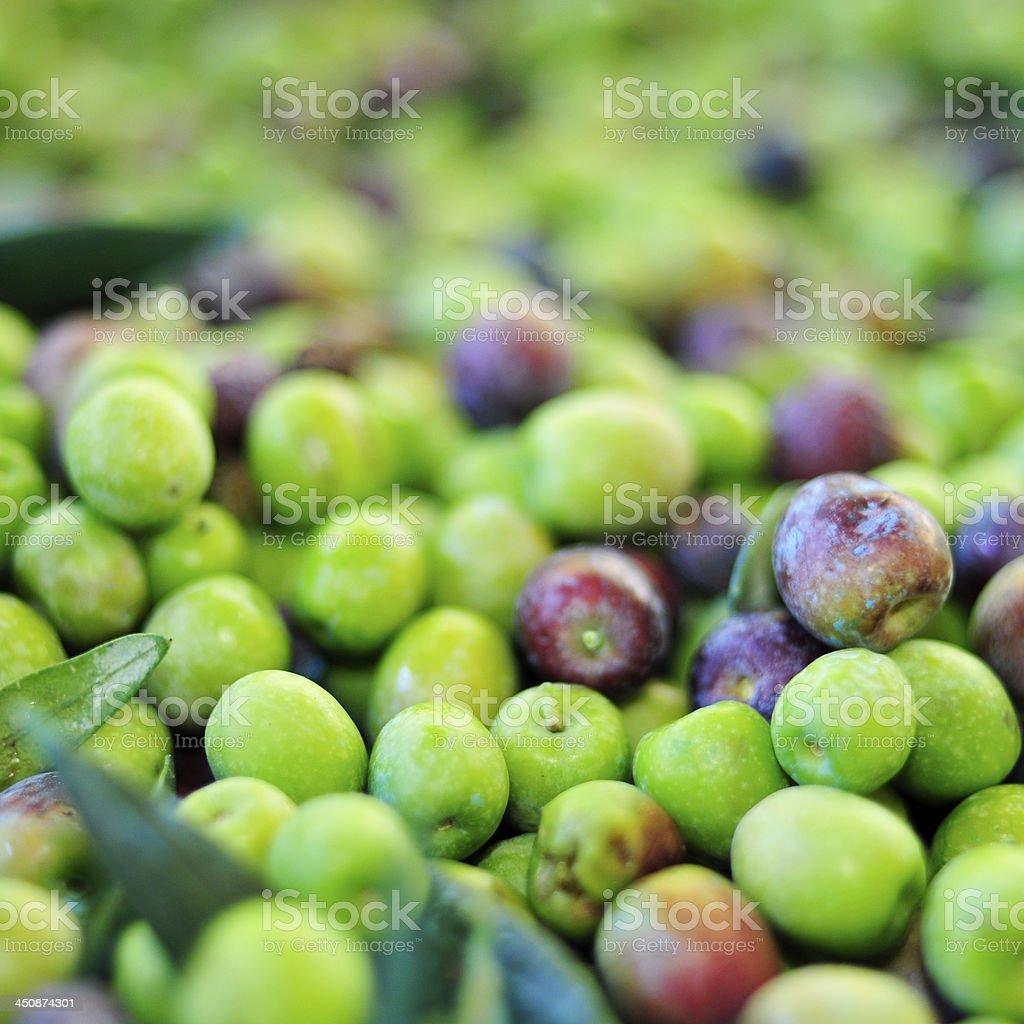arbequina olives stock photo