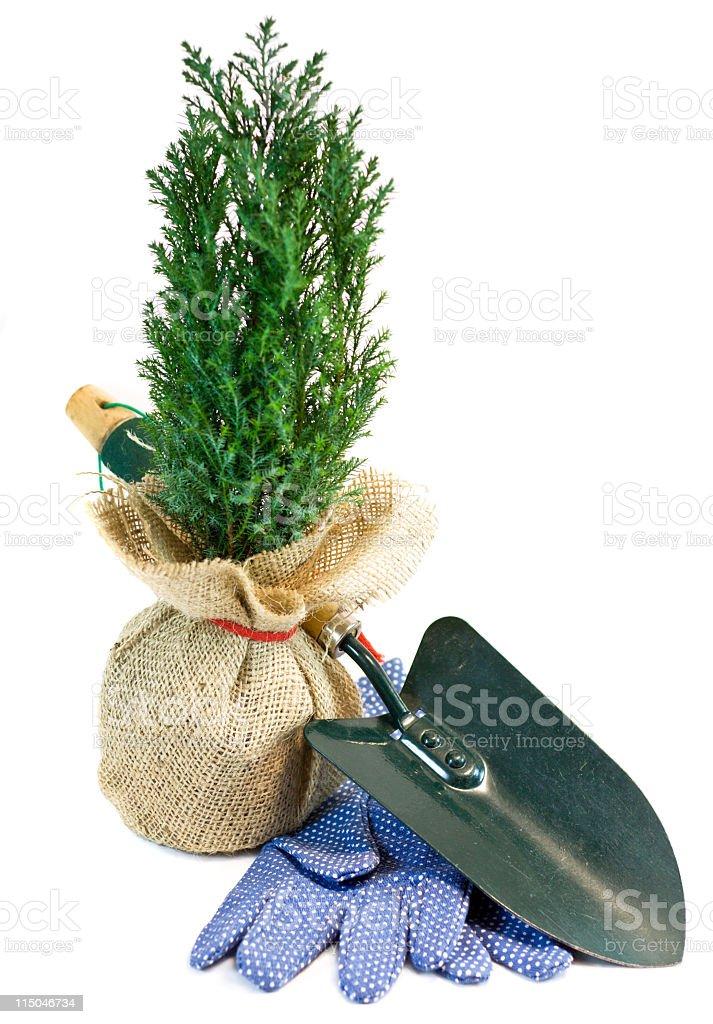 Arbor Day Tree royalty-free stock photo