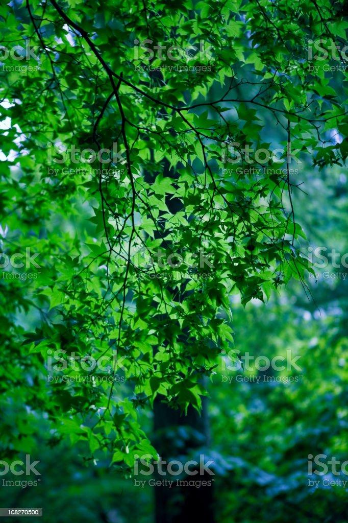 Arboretum Foliage royalty-free stock photo