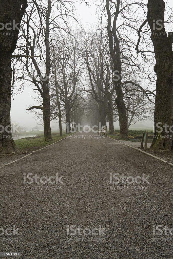 Arboretum walk stock photo
