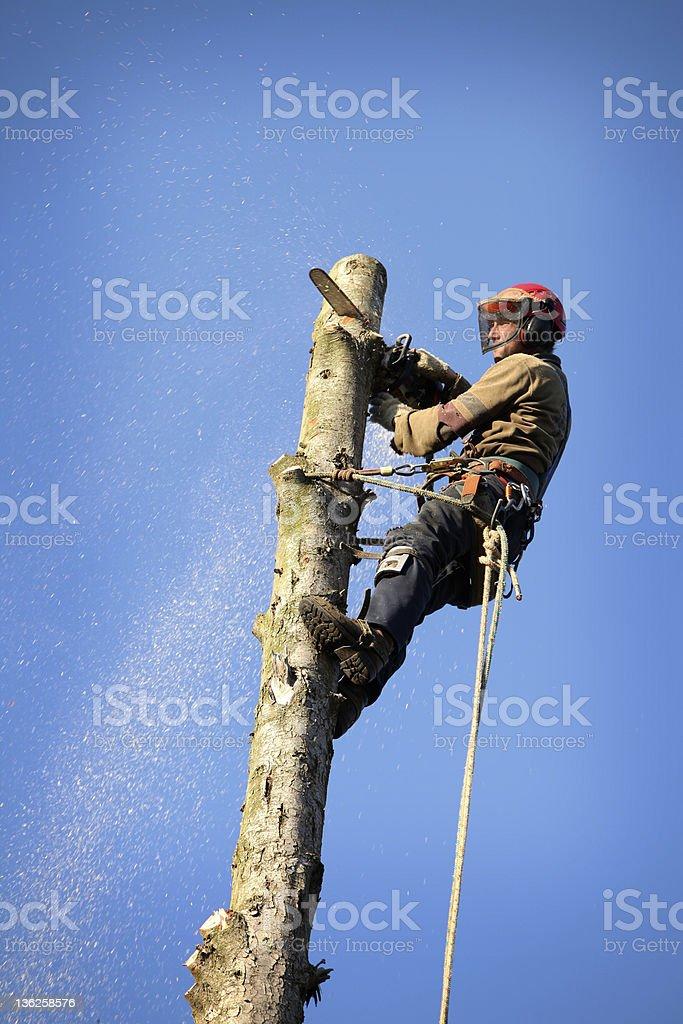 Arborist cutting tree stock photo