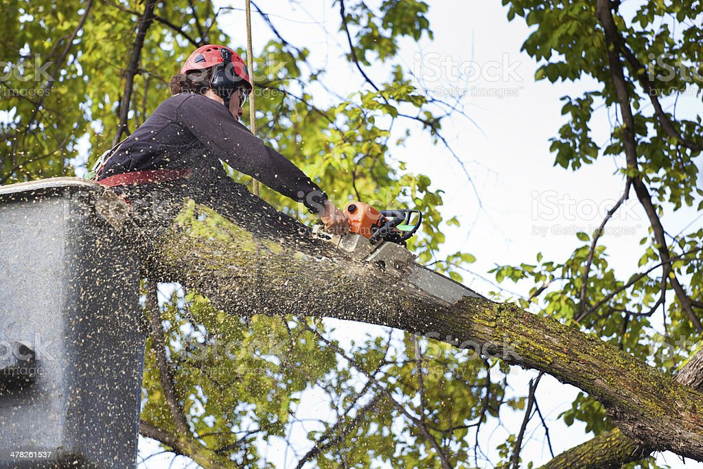 Arborist Tree Pruning Service Working on High Branches stock photo