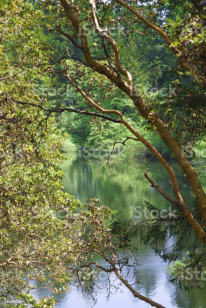 Arbutus Lake royalty-free stock photo