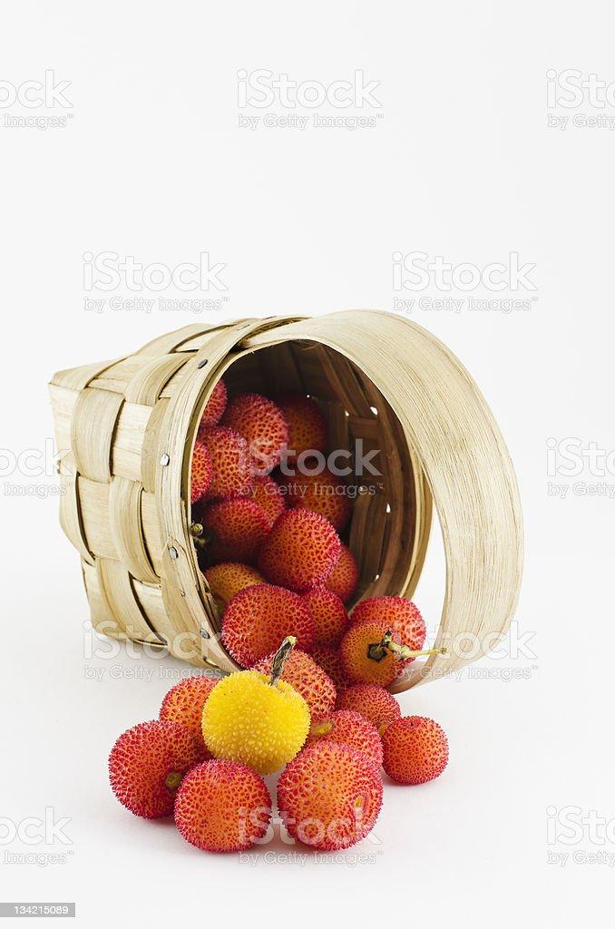 arbutus royalty-free stock photo