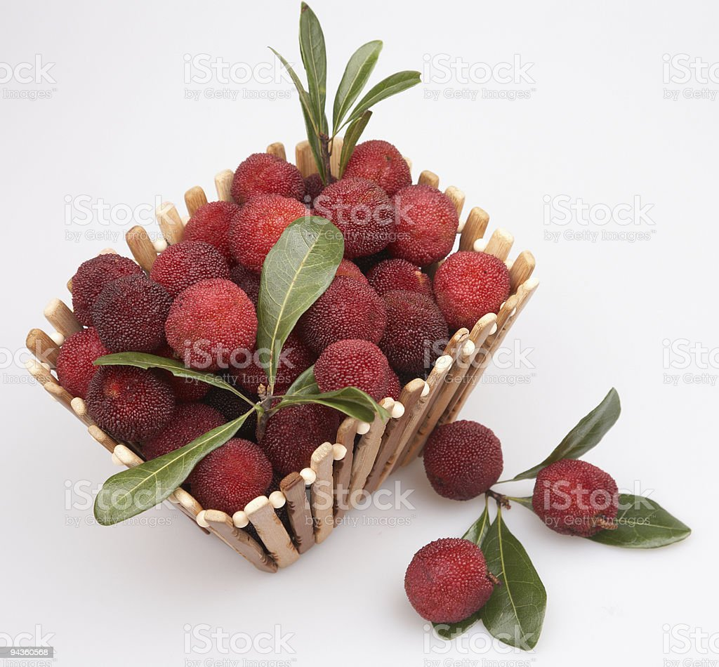 arbutus stock photo
