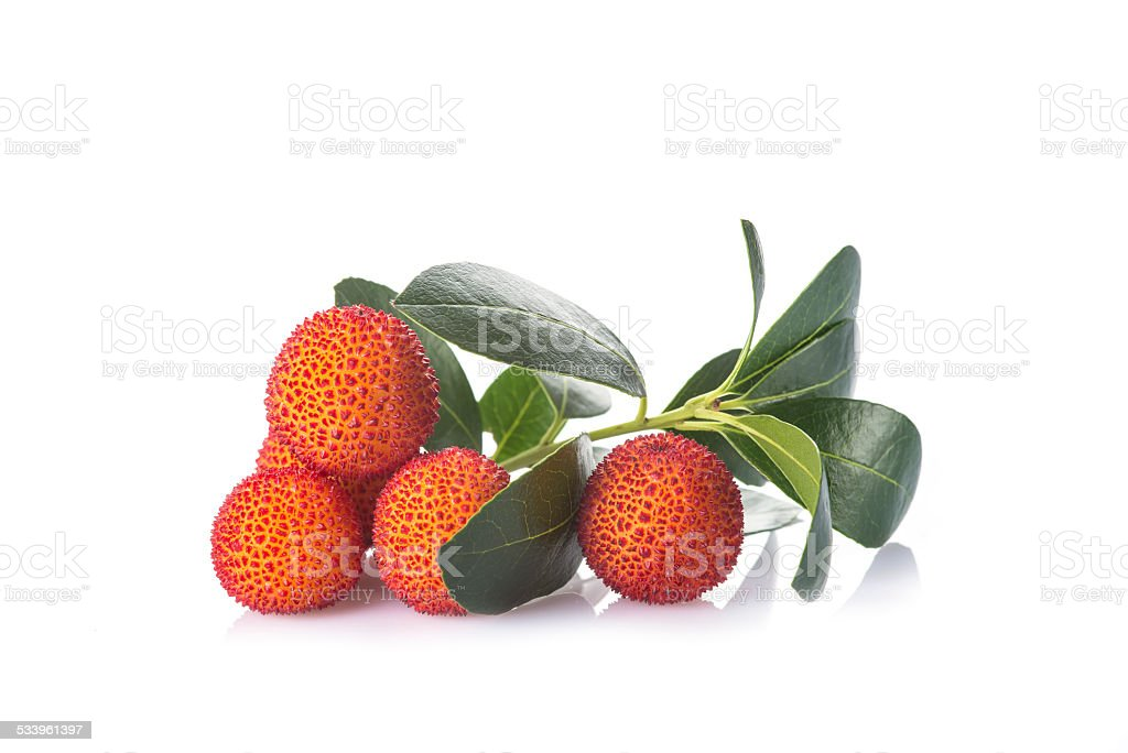 Arbutus unedo fruits isolated on a white background stock photo