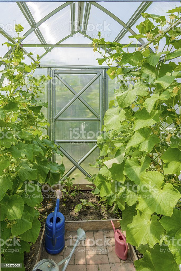 arched greenhouse royalty-free stock photo