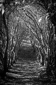 Arched jungle path. Black and white. Portrait orientation.