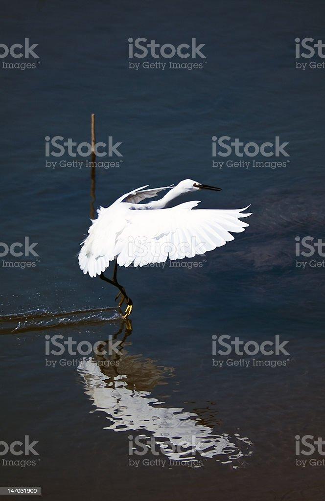 Arche ailes de blanc Eagret Landing photo libre de droits