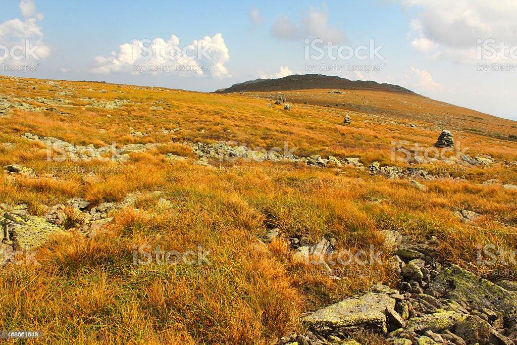 Arctic alpine vegetation on Mt. Washington, New Hampshire. stock photo