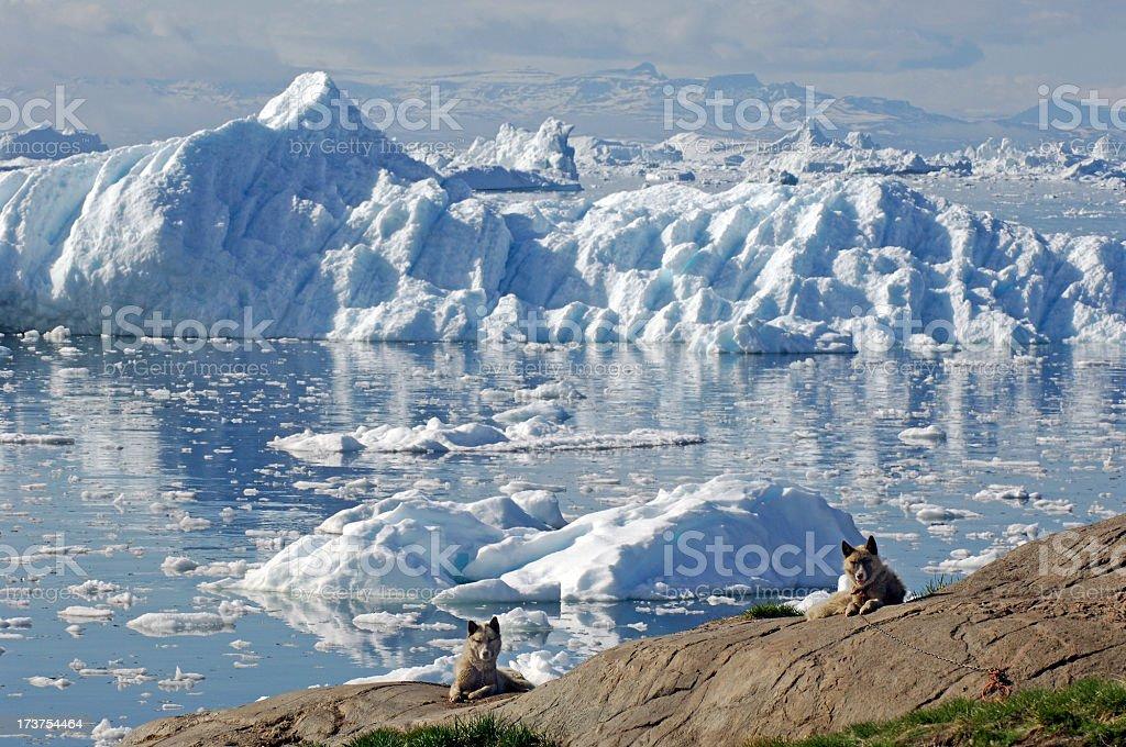 Arctic Dogs stock photo