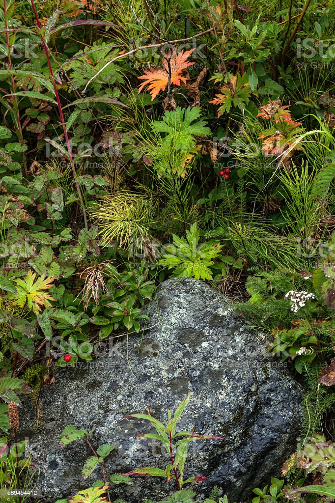 Arctic Ground Cover royalty-free stock photo