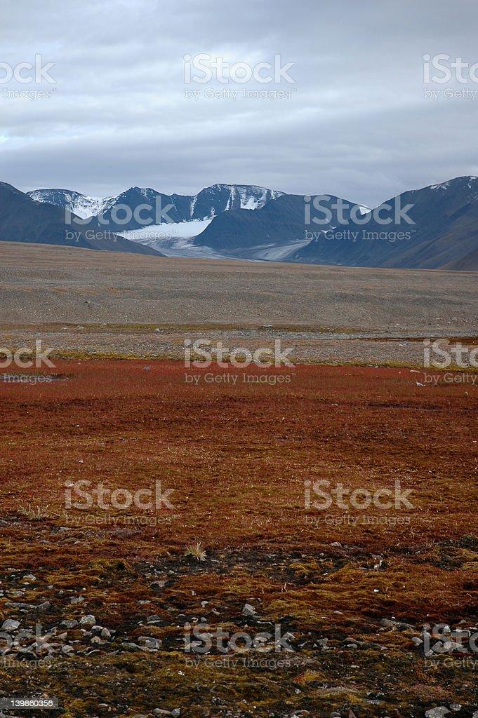 Arctic summer stock photo