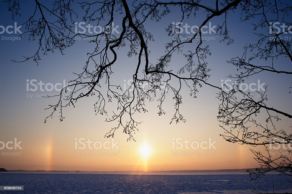 Arctic Sundogs and tree branches stock photo