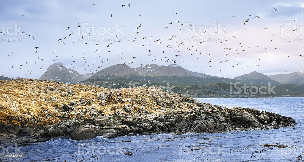 Arctic Terns stock photo