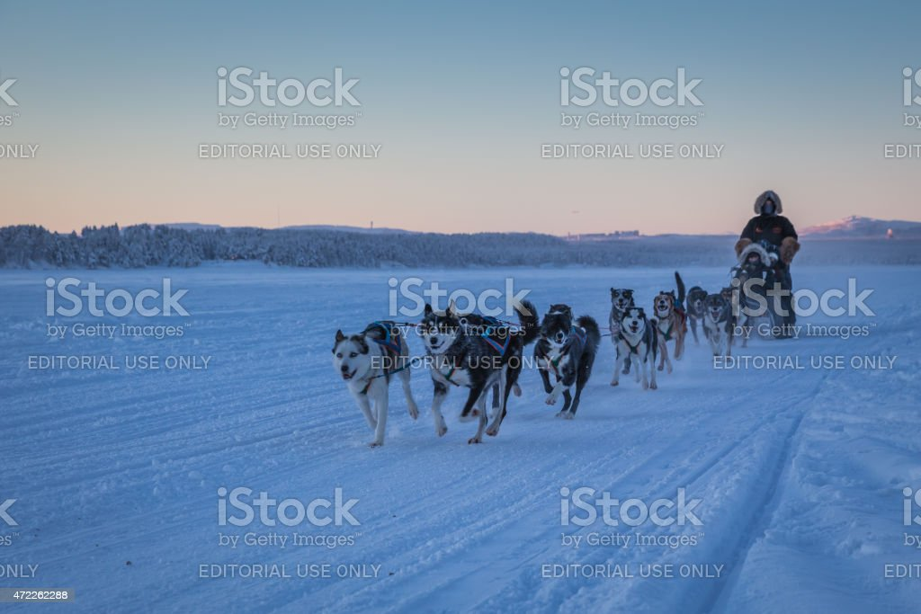 Arctic winter dog sledge ride in the snow stock photo