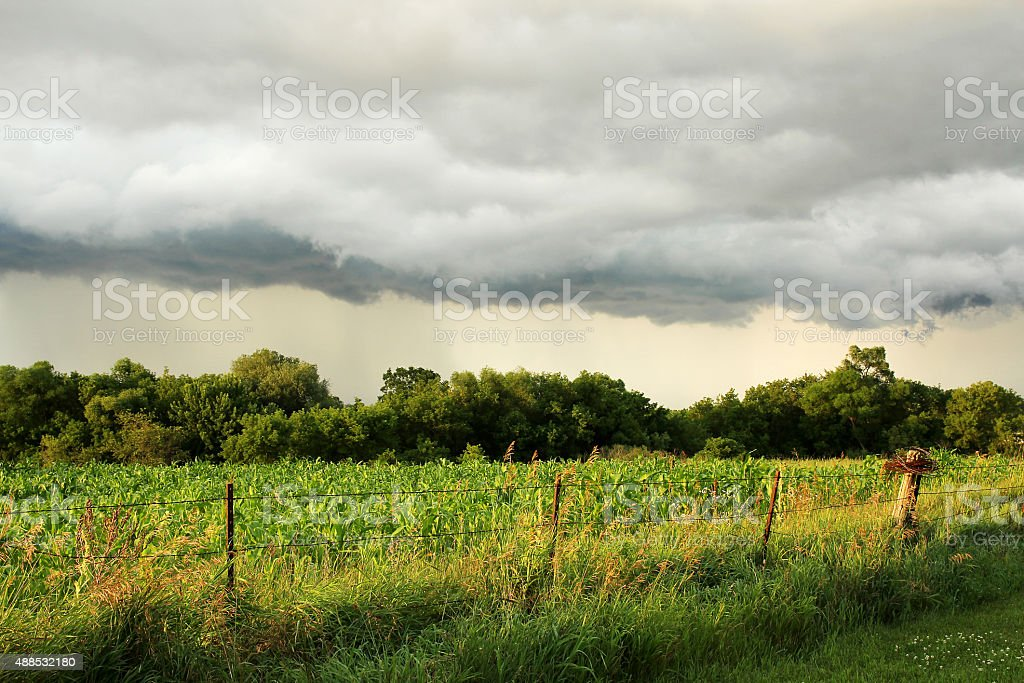 Arcus Shelf Storm Cloud Over Midwest American Corn Field stock photo