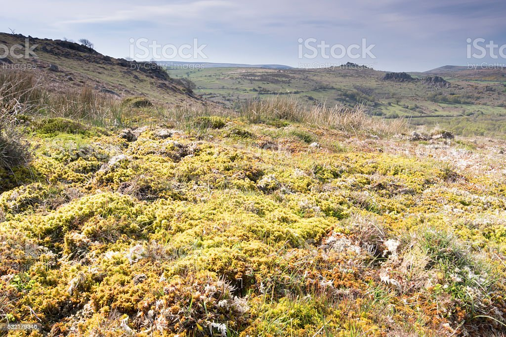Area of raised bog and sphagnum moss on Dartmoor stock photo
