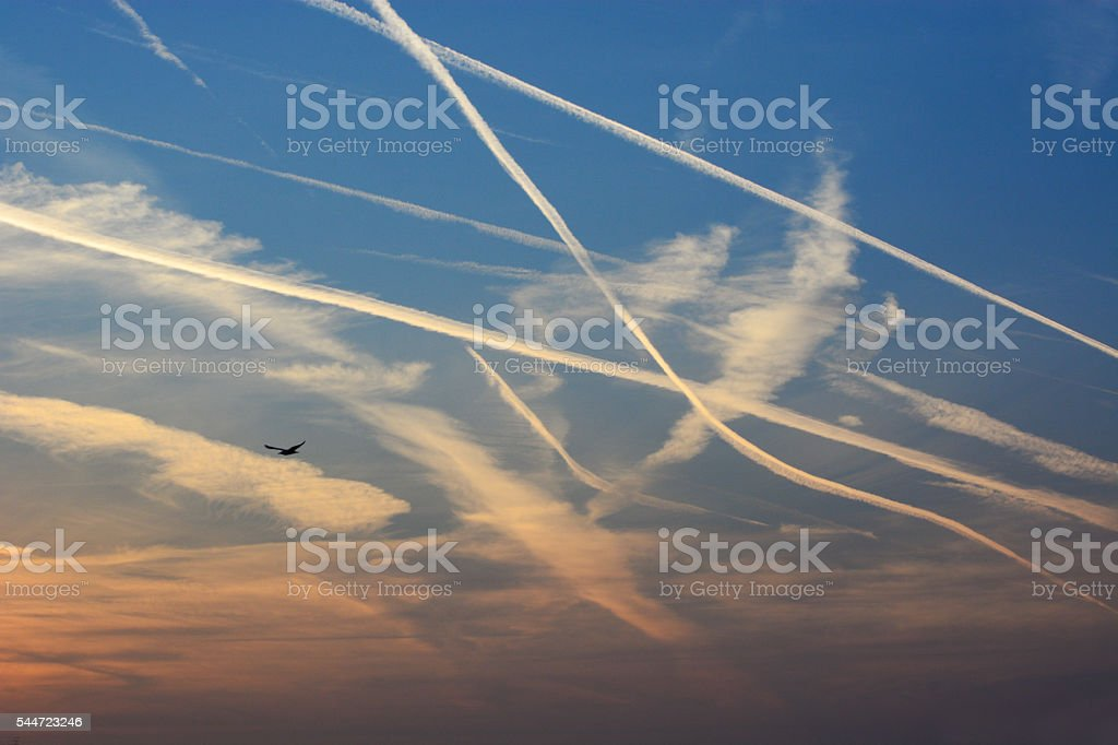 Areoplane Contrails and a Seagull stock photo