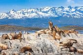 Argentina Ushuaia sea lions on island at Beagle Channel
