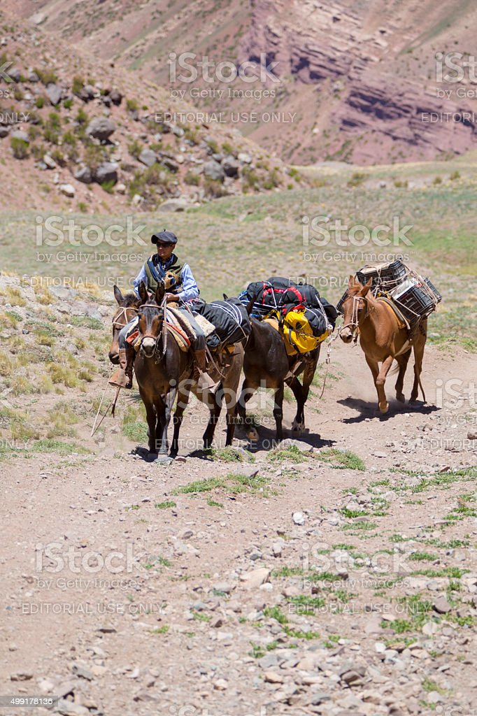 Argentinian man and donkeys carrying bags at the Aconcagua, Arge stock photo