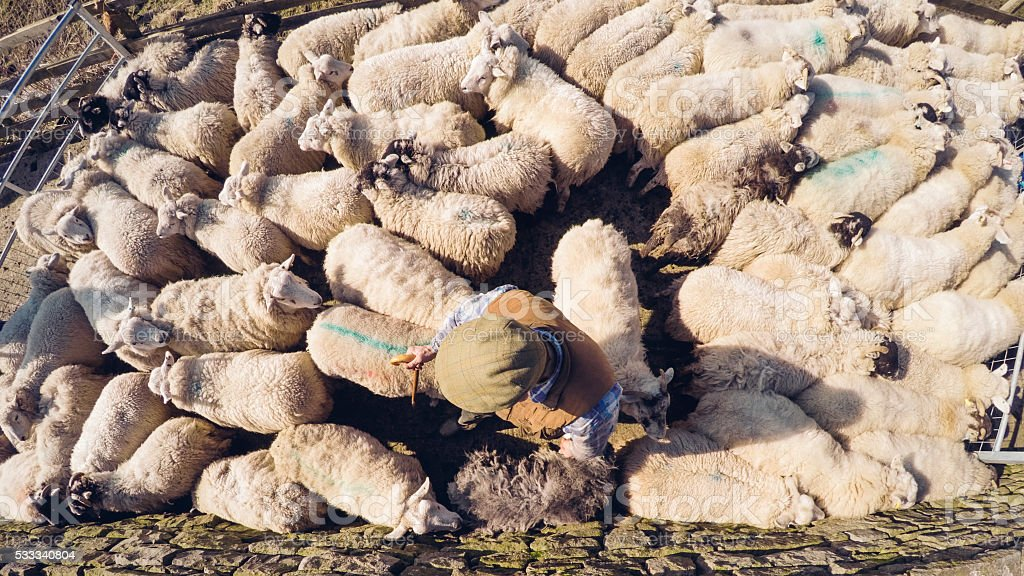 Arial View of a Farmer in a Sheep Pen stock photo