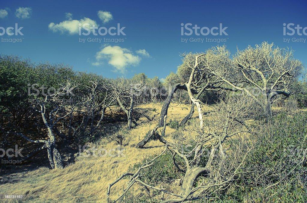 arid land and trees royalty-free stock photo
