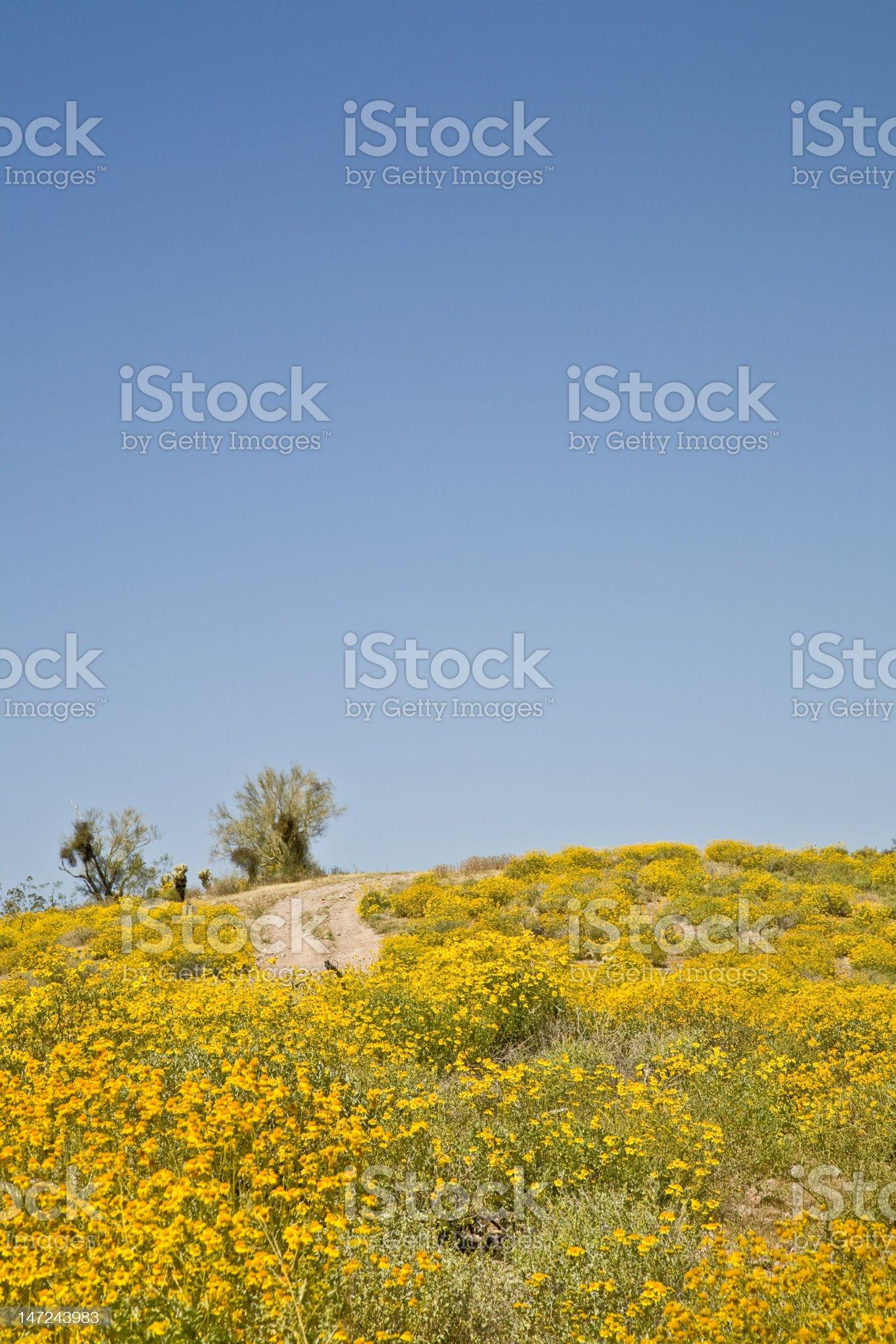 Arizona Back Road and Wild flowers royalty-free stock photo