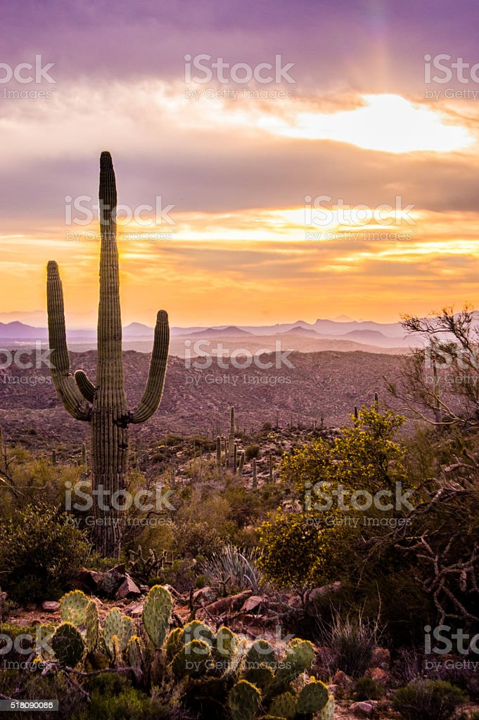 Arizona Beautiful Sunset with Saguaro Cactus stock photo